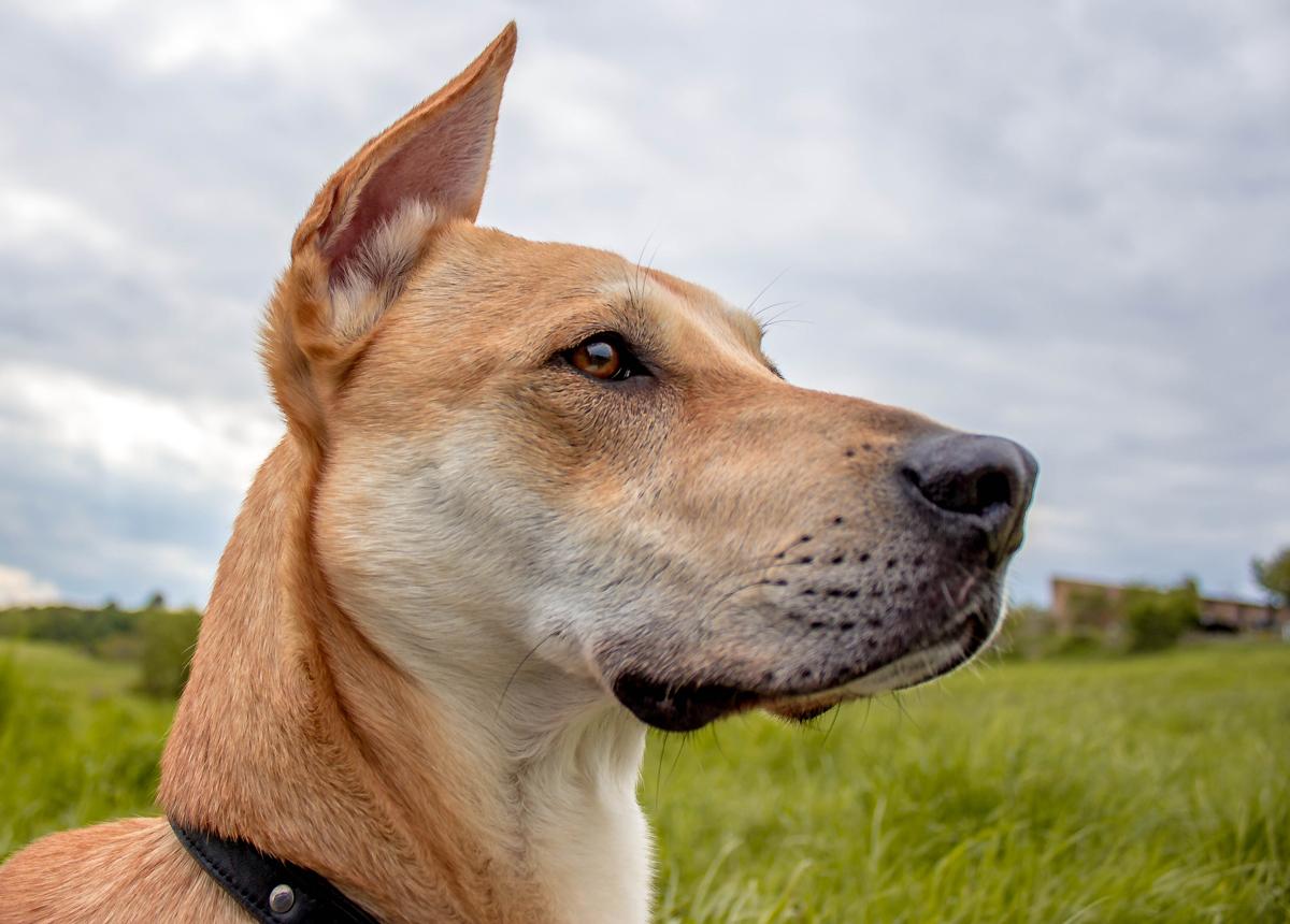 Ein Hundeleben #19