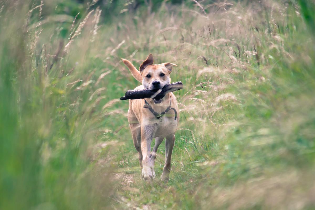 Ein Hundeleben #21